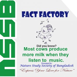 Most cows produce more milk when they listen to music