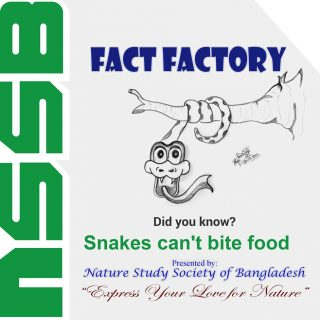 Snakes can't bite food