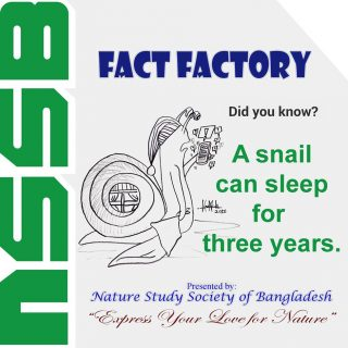 A snail can sleep for three years